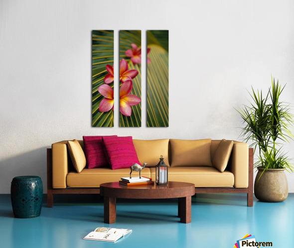 Close-Up Three Pink Plumeria Flowers On Coconut Palm Leaf Selective Focus Split Canvas print