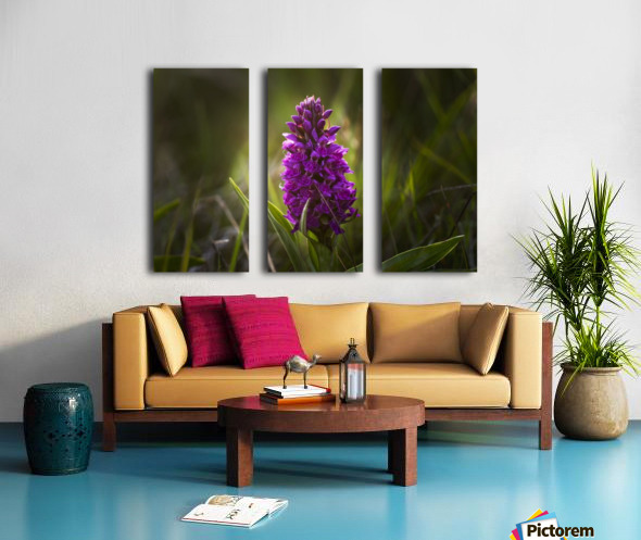 Close up of a pink hyacinth; South Shields, Tyne and Wear, England Split Canvas print