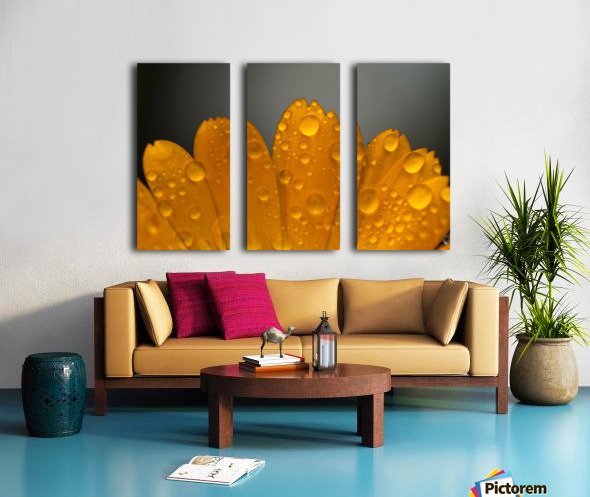 Close up of water droplets on orange flower petals; South Shields, Tyne and Wear, England Split Canvas print