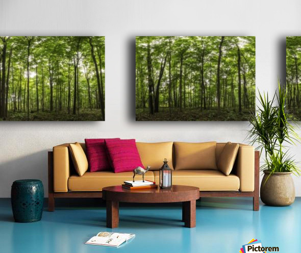 Panoramic image of a deciduous forest; Ontario, Canada Split Canvas print
