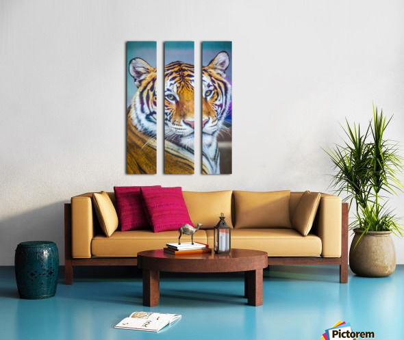 Portrait of Bengal Tiger (panthera tigris tigris) endangered species, captive; Chippewa Falls, Wisconsin, United States of America Split Canvas print
