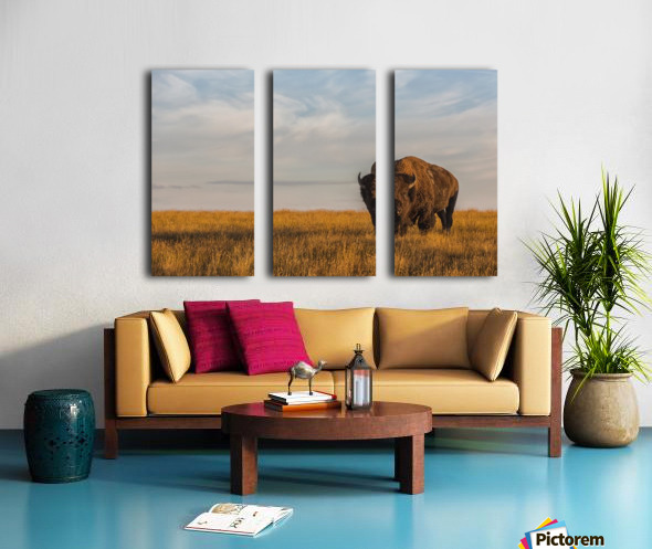 Bison (bison bison), Grasslands National Park; Saskatchewan, Canada Split Canvas print