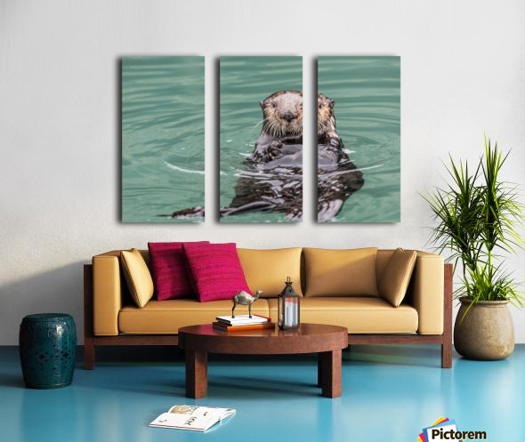 Close-up of a Sea Otter (Enhydra lutris) floating on it's back, looking towards the camera, South-central Alaska; Seward, Alaska, United States of America Split Canvas print