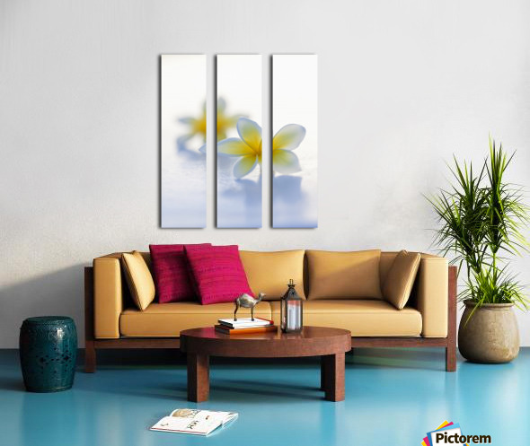 Close-up of two beautiful yellow Plumeria flowers (Apocynaceae) in soft focus; Honolulu, Oahu, Hawaii, United States of America Split Canvas print