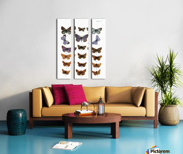 Different types of butterflies. Illustration by W.S.Furneaux. From the book Butterflies, Moths and Other Insects and Creatures of the Countryside. Published 1927. Split Canvas print