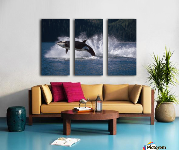Double Breaching Orcas Bainbridge Passage Prince William Sound Alaska Summer Southcentral Split Canvas print