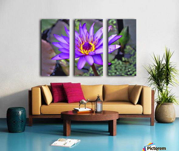waterflower Split Canvas print