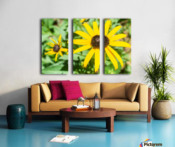 Yellow Cone Flowers  Split Canvas print