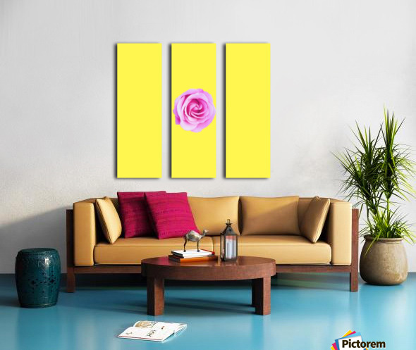 closeup pink rose with yellow background Split Canvas print