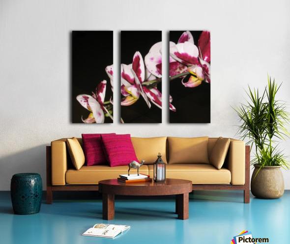 Sexy Orchid Split Canvas print