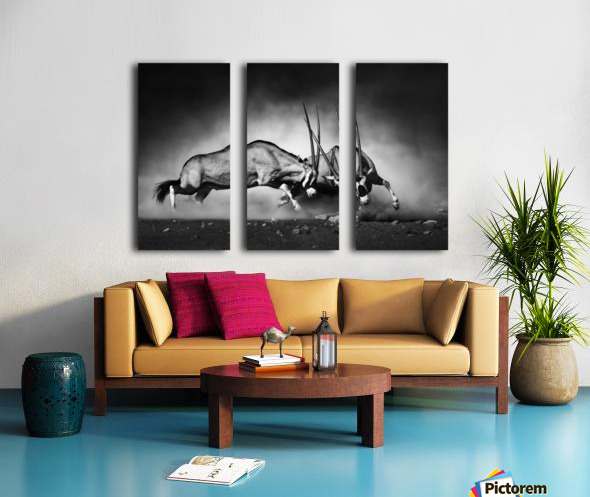 Gemsbok fight Split Canvas print