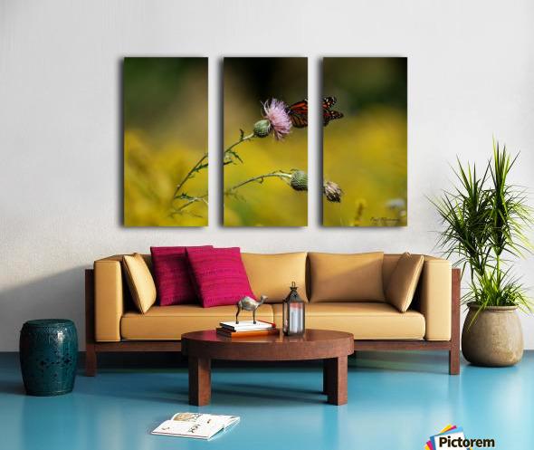0017- Monarch Meal Split Canvas print