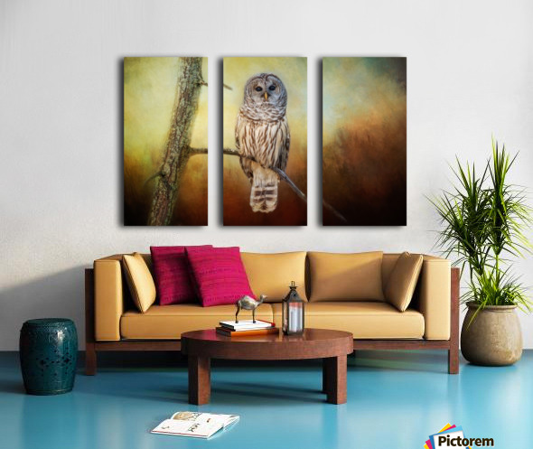 Barred Owl at sunrise with Textures Split Canvas print