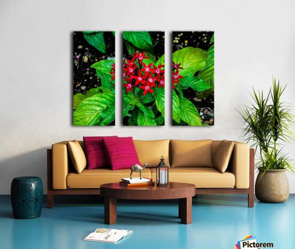 Beauty in the Flower Split Canvas print
