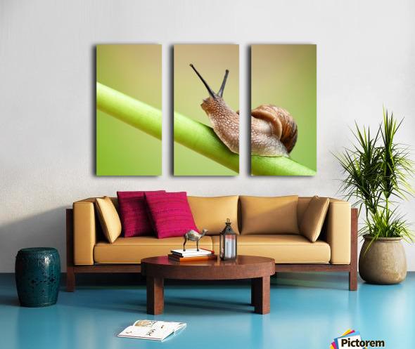 Snail on green stem Split Canvas print