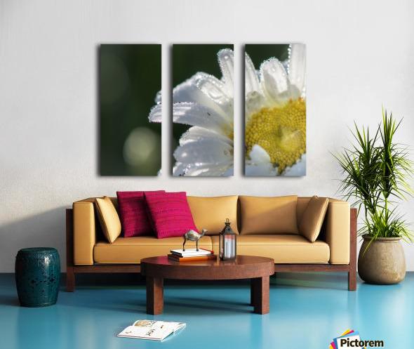 Blancheur de la rosee Split Canvas print