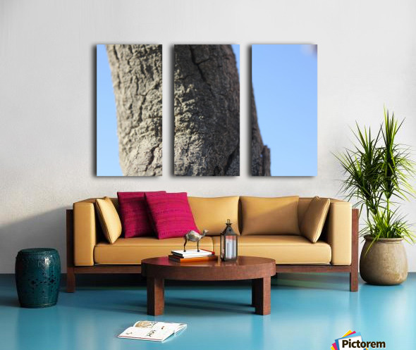 IMG_2132 Split Canvas print