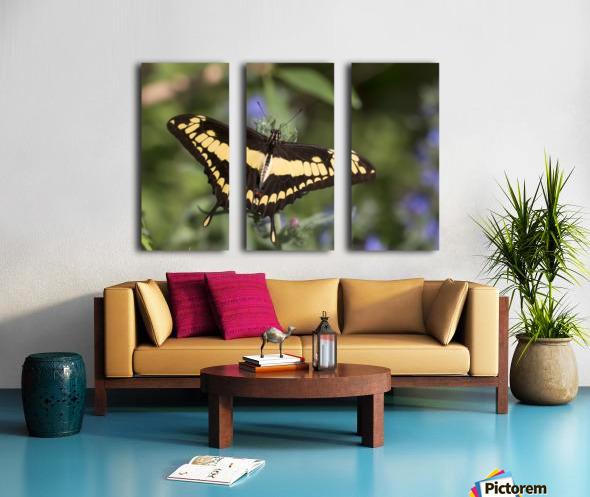 King swallowtail butterfly Split Canvas print