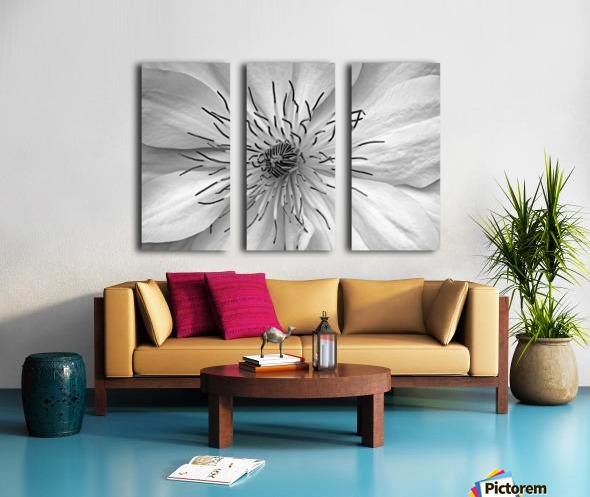 Clematis White Split Canvas print