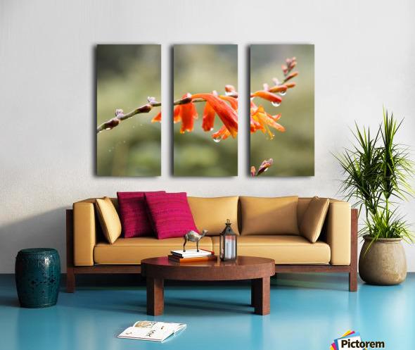 Orange Blooms with droplets Split Canvas print