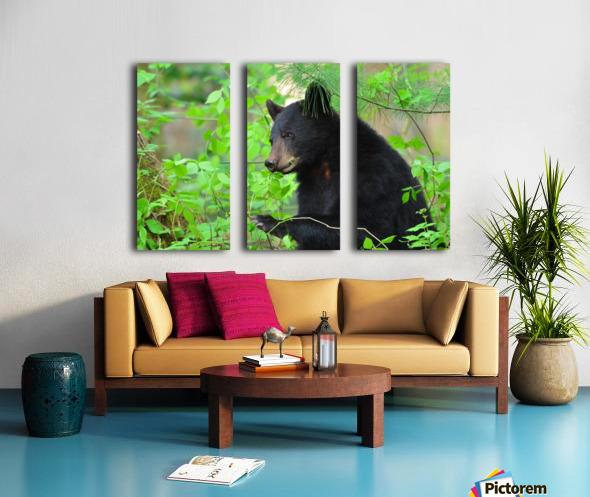 3646-Bear Lunch Split Canvas print