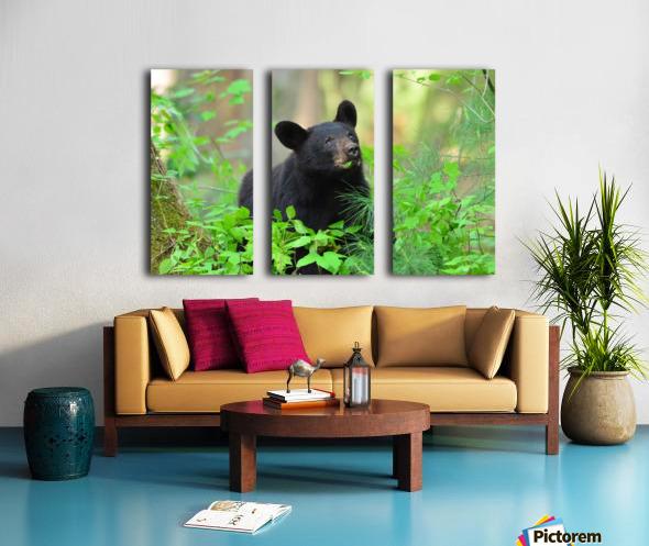 3597-Black Bear Toile Multi-Panneaux