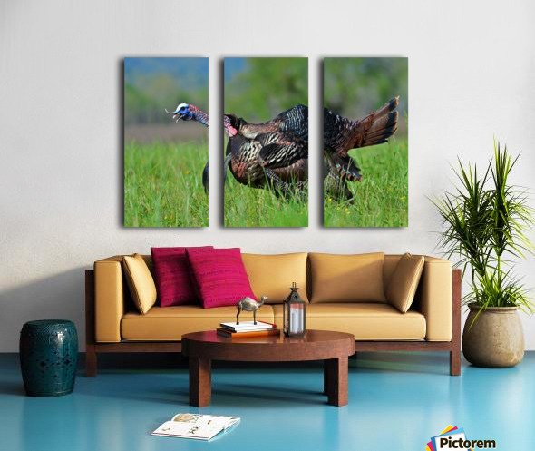 7_Gobbling Turkey Split Canvas print