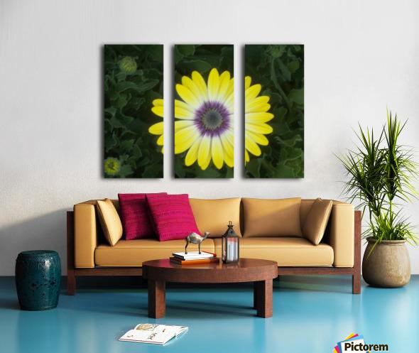 DSCN0662 Split Canvas print