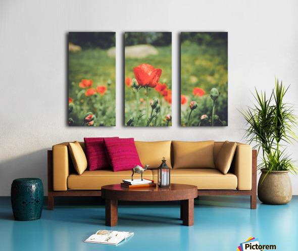 Field of Poppies Split Canvas print
