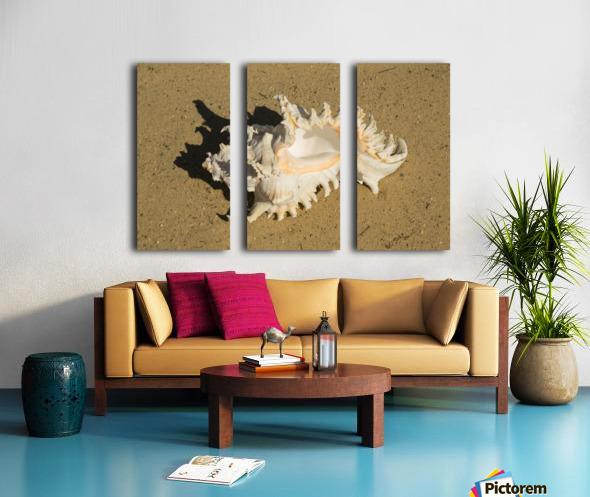 Murex Ramosun Rams Horn Shell Split Canvas print