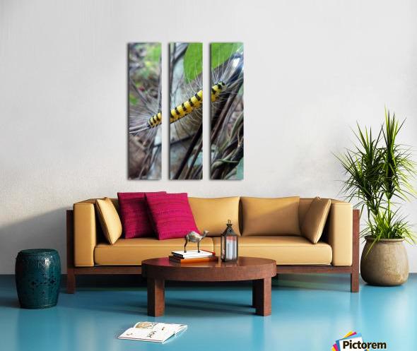 Nature  Split Canvas print