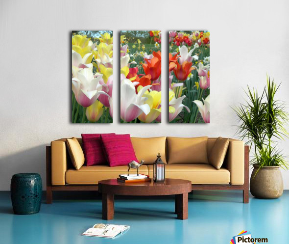Beautiful Tulip Garden Photograph Split Canvas print
