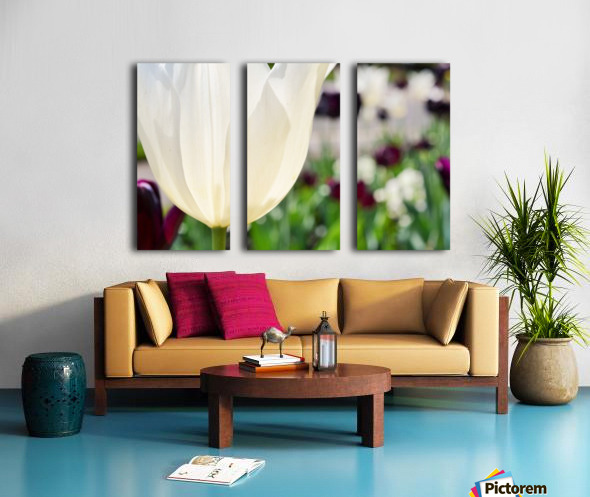 White Tulip Photograph Split Canvas print