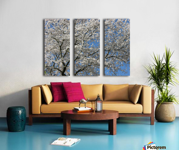White Spring Blossoms Photograph Split Canvas print