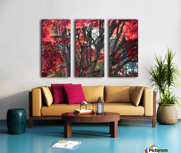 Beautiful Red Fall Foliage Split Canvas print