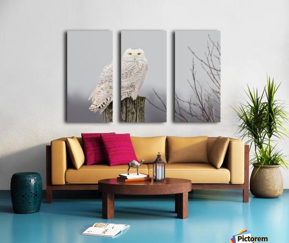 Snowy Owl on the Fence Split Canvas print