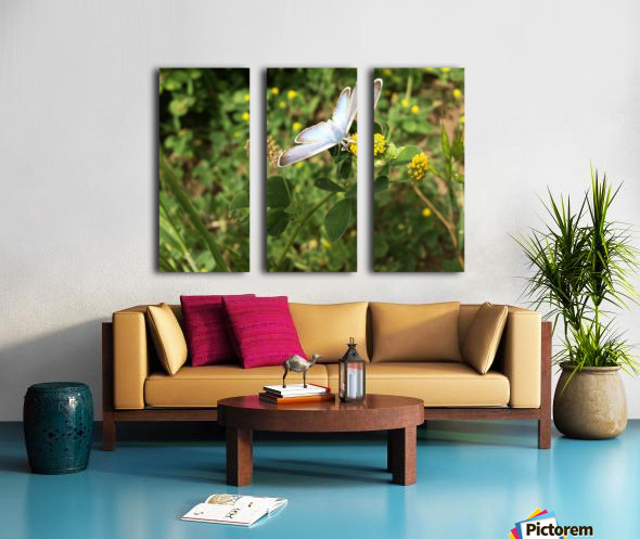 Butterfly on Clover Split Canvas print
