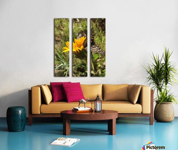 Butterfly on Arrowleaf  Split Canvas print