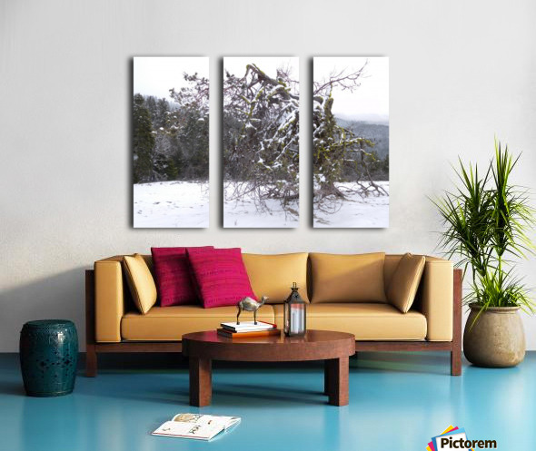 Ancient Mountain Juniper Split Canvas print