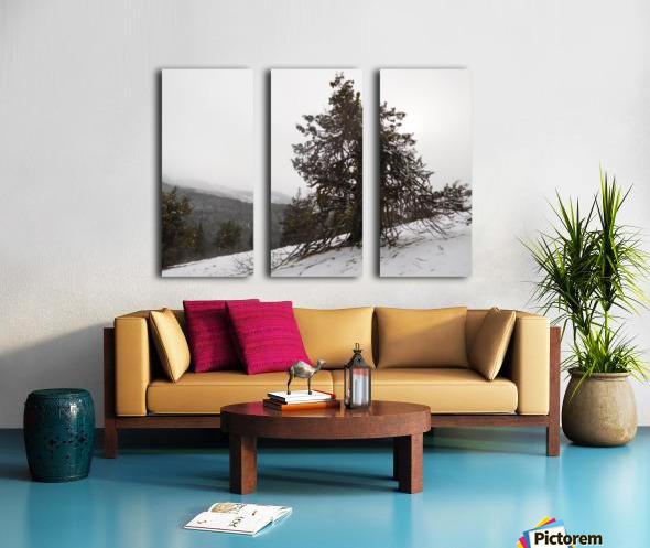 Snowy Mountain Juniper Split Canvas print
