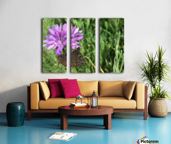 Butterfly on Wildflower Split Canvas print