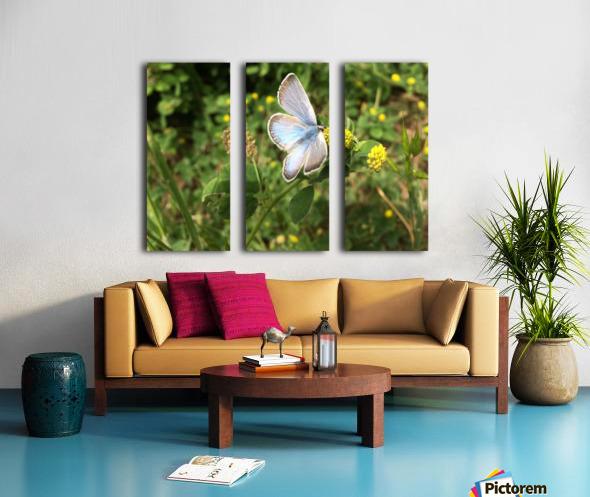 Blue Butterfly on Clover Split Canvas print