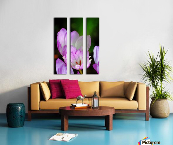 Fall Crocus Split Canvas print