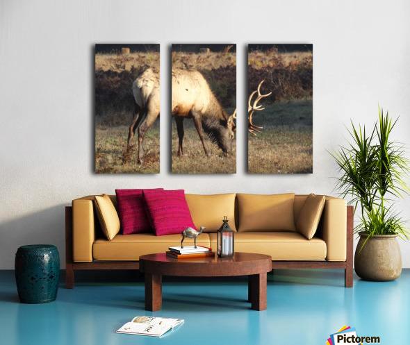 Roosevelt Elk Split Canvas print