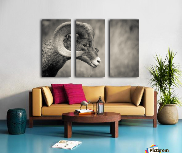 Head Strong Split Canvas print