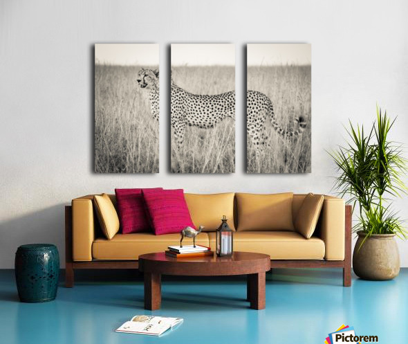 Born to Speed Split Canvas print