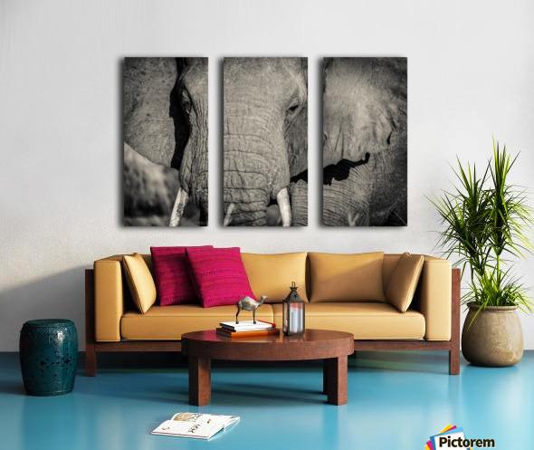 Elephant Portrait Split Canvas print