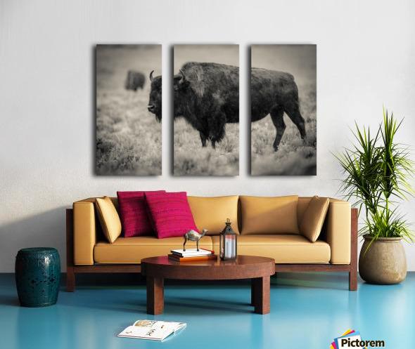 Bison of the Far West Split Canvas print