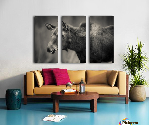 Young Moose Split Canvas print