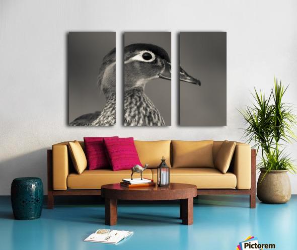 Wood Duck Split Canvas print